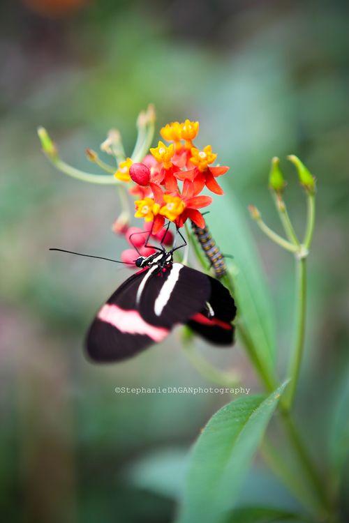 Papillon5 copie